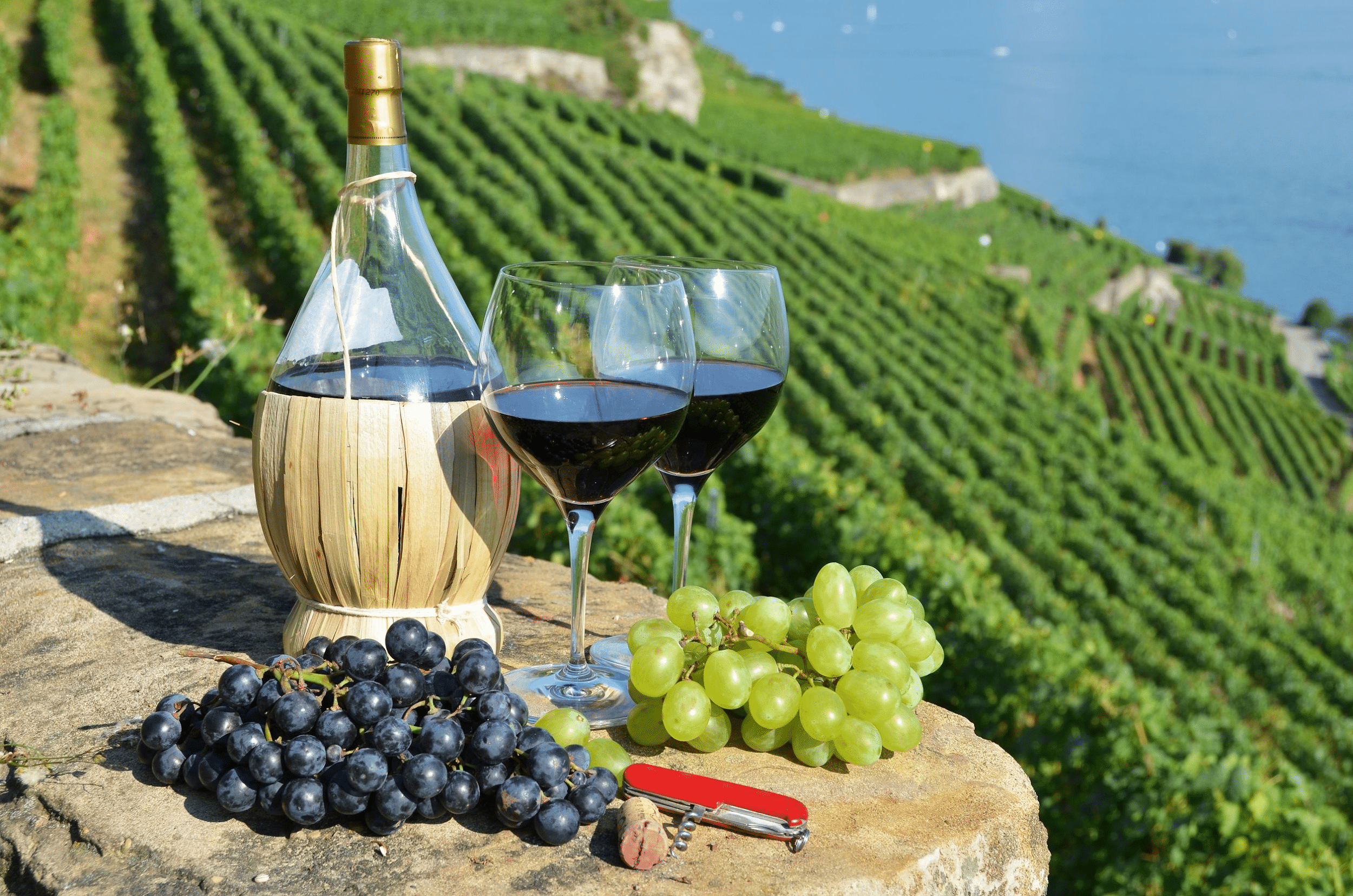 Two glasses filled with Italian red wine and a glass wine jug on a stone plinth with a bunch of red and a bunch of green grapes overlooking rolling Italian grape farm